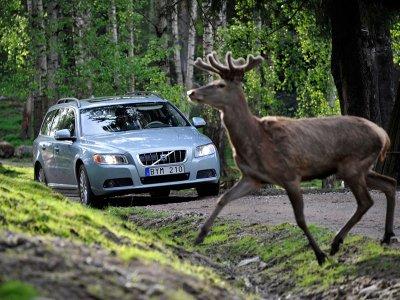 В результате наезда на диких животных с начала года пострадали четыре водителя
