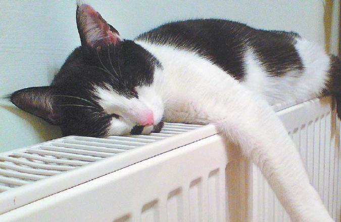 Когда в дома смолян придет тепло?