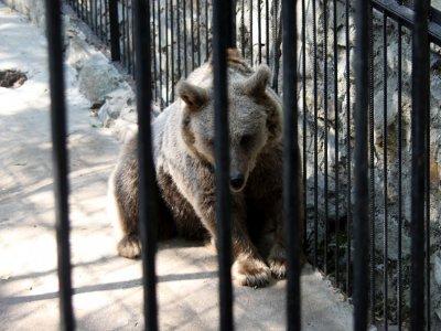 В Смоленской области бурого медведя забрали у его незаконного хозяина