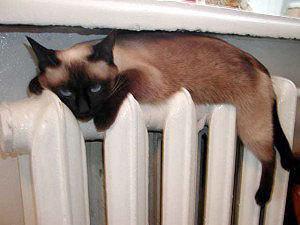 В Смоленске сроки подключения дома к теплу можно узнать по телефону