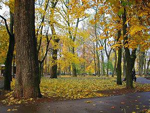 В смоленском саду Блонье начнется вырубка деревьев