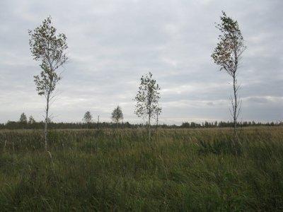 Более половины сельхозучастков региона заросли деревьями и кустарниками