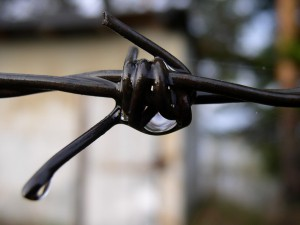 Правозащитники восемь раз за год посещали места принудительного содержания