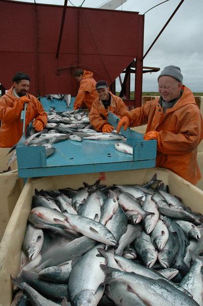 Россия стала лидером по закупкам норвежской рыбы
