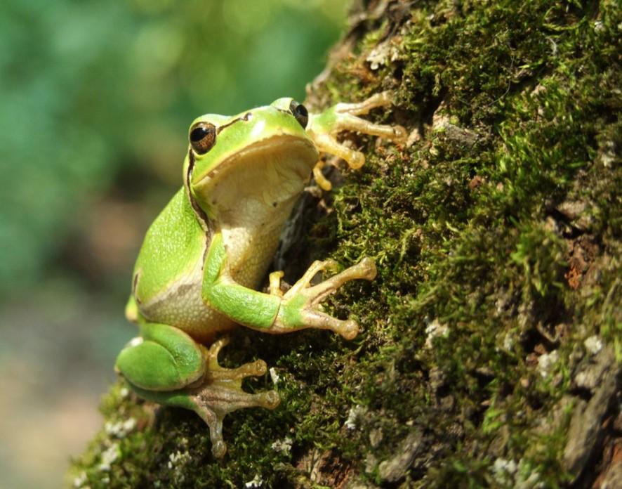Самые маленькие позвоночные в мире оказались лягушками