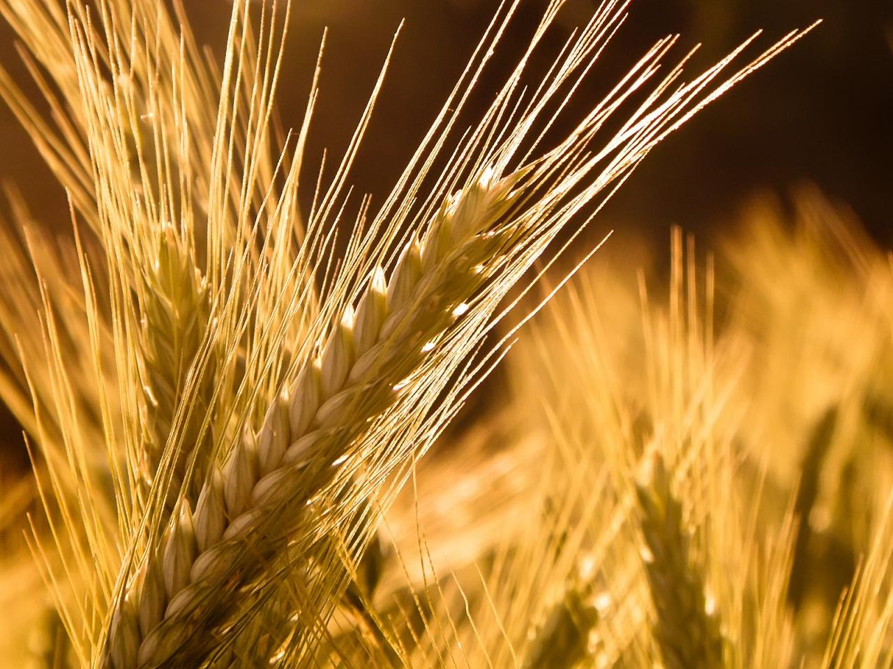 Успехи Смоленской области в аграрной сфере достойны внимания