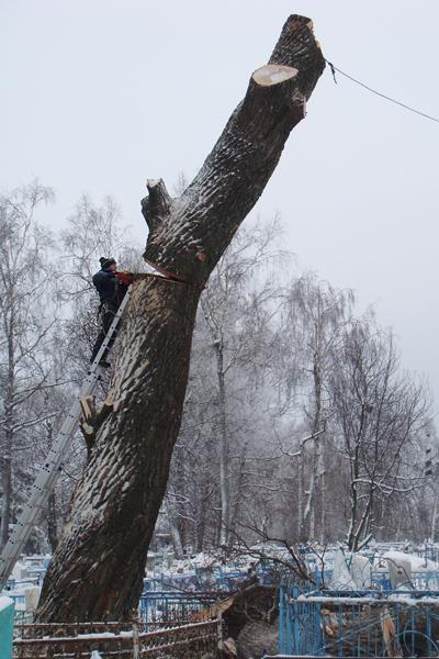 Между жителями смоленского поселка разгорелся конфликт из-за спила деревьев
