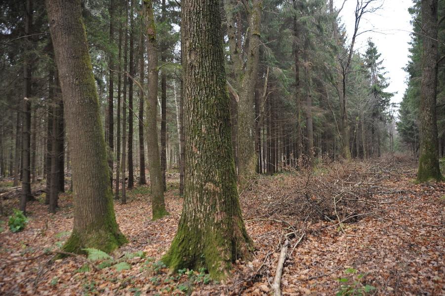 В 2012г. для Смоленской области будет разработан первый в ЦФО план лесопользования