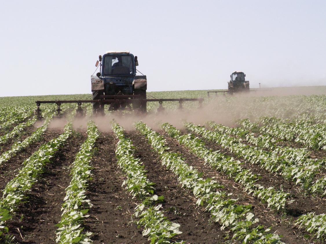 После санкций Россельхознадзора в оборот ввели 27 тысяч гектаров земли