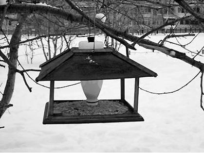 В Смоленской области создают кормушки для птиц