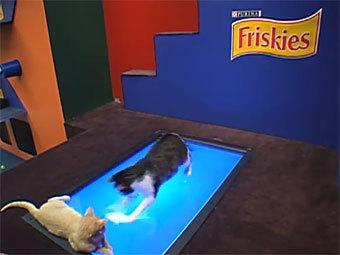 Friskies предложил поиграть с живыми котами в Facebook