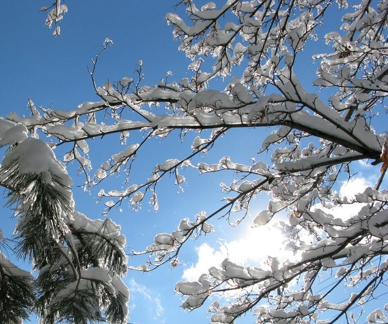 Первая февральская оттепель пришла в Смоленск