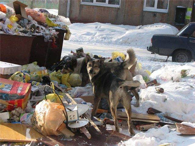 Из-за морозов вышла из строя половина мусороуборочной техники