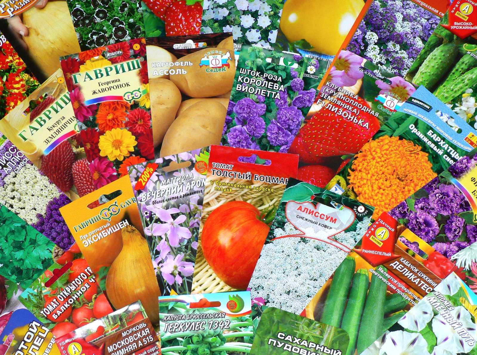 Как выбрать всхожие семена
