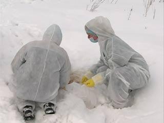 «Россельхознадзор» принимает меры по устранению свалки биоотходов в смоленском Пригорском