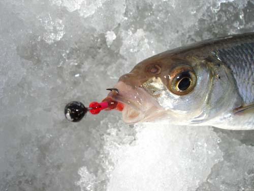 Смолянин победил в чемпионате по рыбной ловле на мормышку
