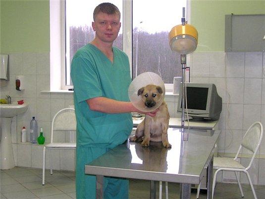 Смоленских собак привьют от бешенства