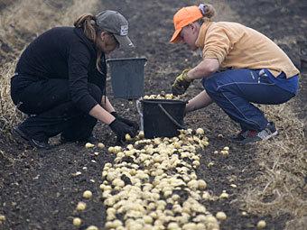 Москва отменила закон об отправке студентов «на картошку»