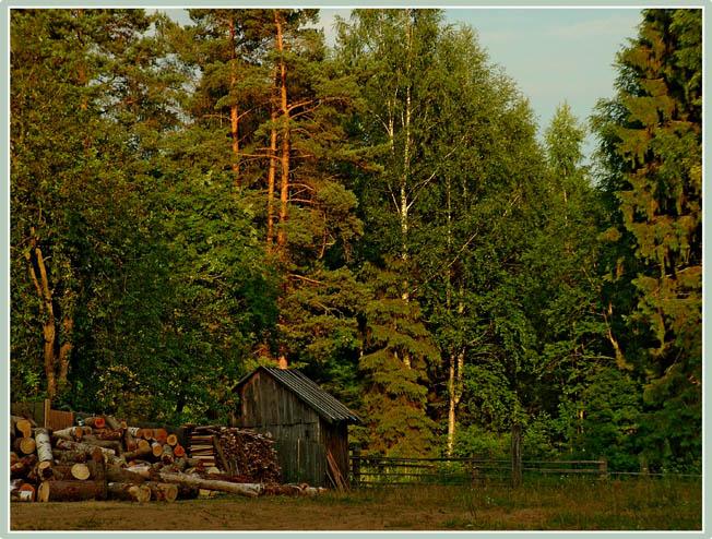 В Смоленской области с поличным задержали лесорубов из Брянска