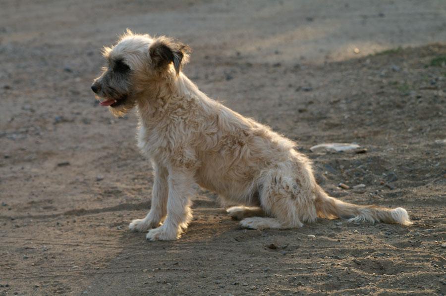 В Смоленской области от бешенства умерла собака