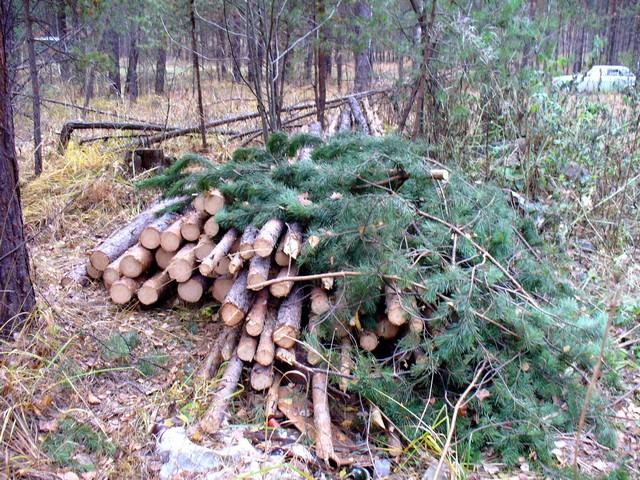 В Смоленской области сельского депутата проверяют на причастность к незаконной порубке деревьев
