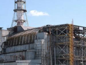 На Украине разворовали сеянцы сосен для Чернобыльской зоны