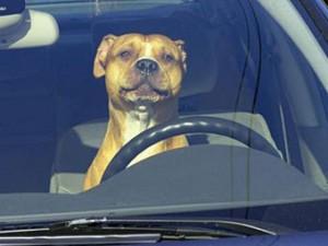 Московские псы угнали машину у своего хозяина