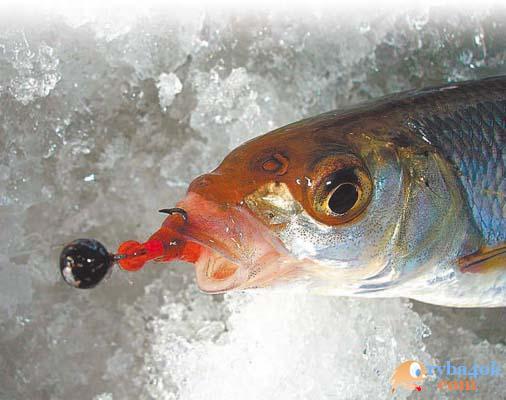 Смолянин победил на чемпионате страны по рыбной ловле на мормышку