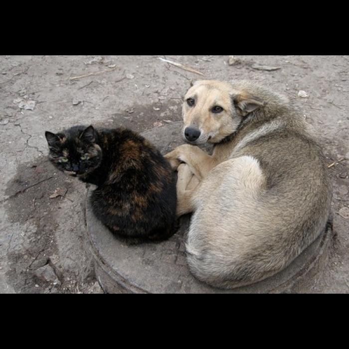 Место под приют для животных в Смоленске есть