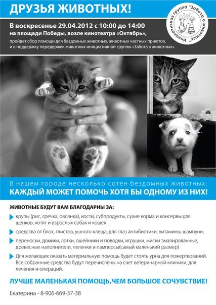 29 апреля в Смоленске пройдет сбор помощи для бездомных животных