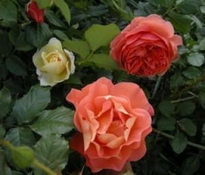 С 26 по 28 апреля в Смоленске пройдет выставка-продажа «Сад и огород»