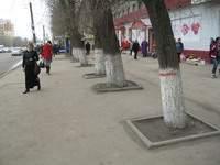 В Смоленске улицу Крупской расширят за счет деревьев