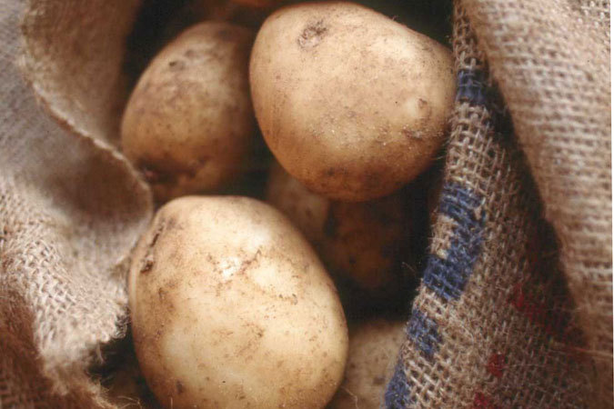 Россельхознадзор задержал четыре тонны белорусского картофеля