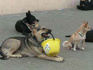 Смолянин создал приют для бродячих собак
