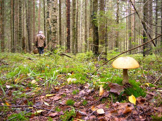 Клещи-2. Встречайте во всех лесах области