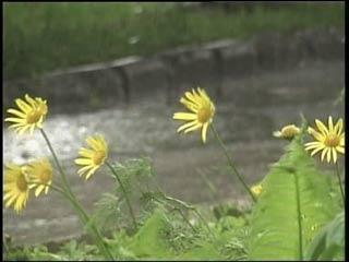 На Смоленск вновь обрушилась непогода