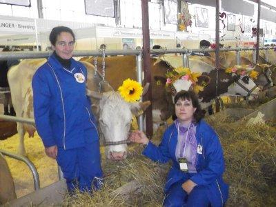 Смоленские коровы стали золотыми медалистками