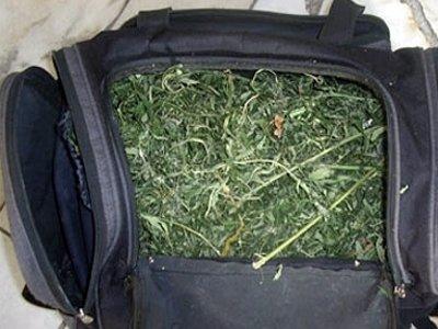 Сумка с марихуаной опровергла аргумент хозяина о дикой конопле в его огороде