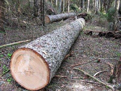 Полицейские поймали «черных» лесорубов в Рославльском и Шумячском районах