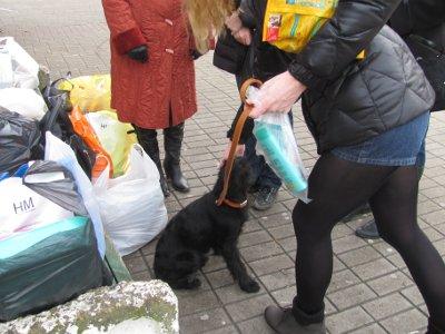 Смоленские волонтеры пристроили более тысячи бродячих собак