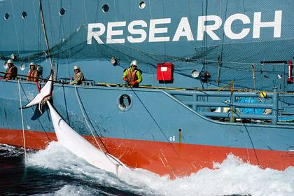 Япония впервые назвала истинную цель отлова китов