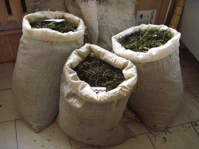 У молодого наркоагрария изъяли 20 килограммов марихуаны
