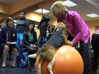 В Смоленске состоялся семинар по фитнесу для собак