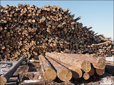 Ставший банкротом депутат провернул мошенническую сделку с древесиной