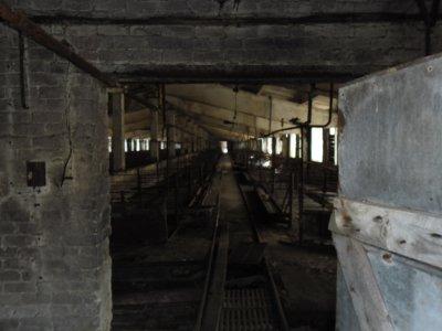 Недоедание погубило три тысячи свиней на ферме «Смолмяса»
