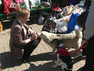 В Смоленске прошла акция для помощи бездомным животным