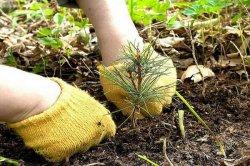В Смоленской области посадят более двух тысяч гектаров леса