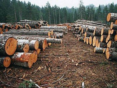 Лесопромышленник за 200 тысяч рублей выдал разрешение на заготовку древесины