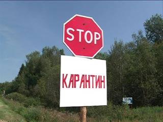 В Сычевском районе объявлен карантин из-за африканской чумы свиней