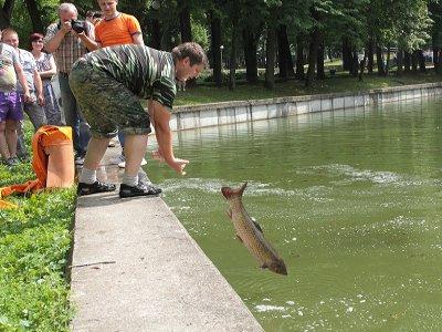 Парковый пруд для очистки от водорослей заселили тремя видами рыб